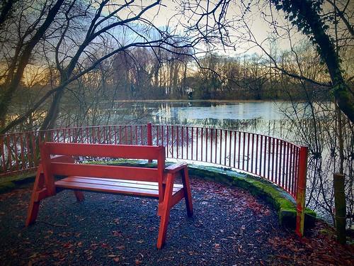 trees ireland winter sunset irish lake ice water fence bench cork hbm banteerpark