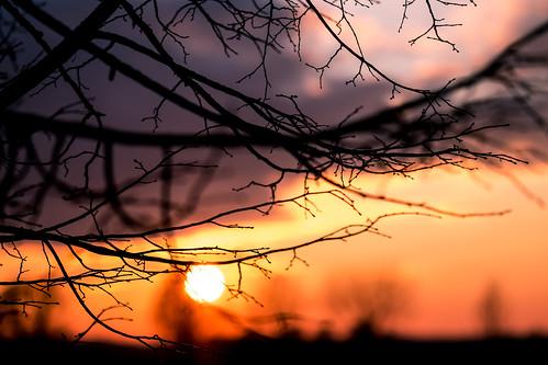 light sunset orange tree nature colors fuji bokeh depthoffield fujifilm xe2s