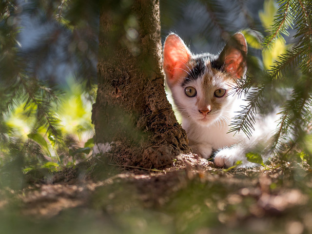 Cat under a tree looking at the camera