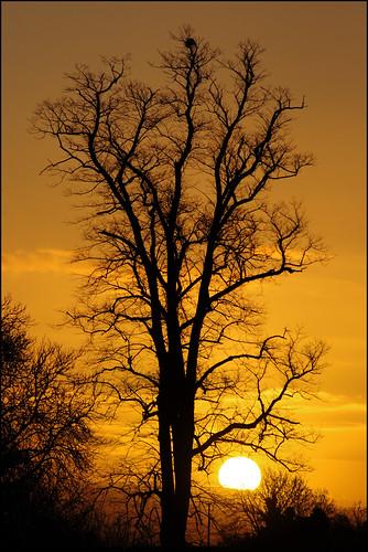 sunrise ukoxonblenheimpalacejanuarysunrise01dsc2052