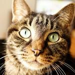 こげ朝日2 #こげ #朝日 #まったり #猫 #cat #morning #koge