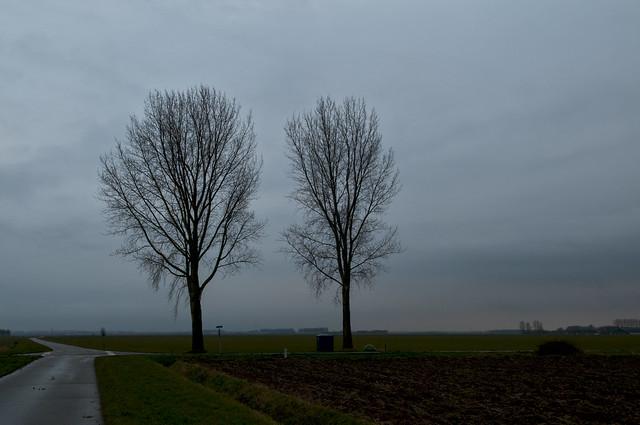 Polders van het Hoogh_ en Laag Hemael . Donkere winterdag met twee bomen