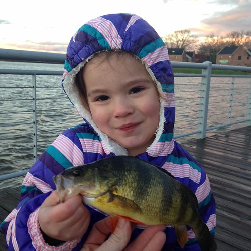 Photo of young girl holding a white perch