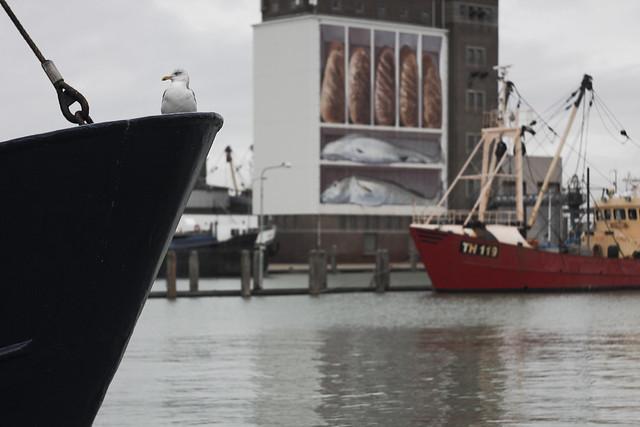 Am Meer: Hafen in Breskens