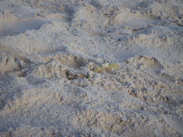 木, 2015-12-10 15:32 - Dover Beach