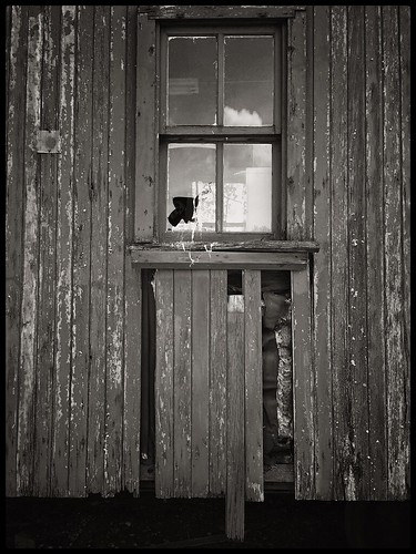 old travel windows sky blackandwhite bw stilllife newyork reflection texture abandoned broken window glass monochrome architecture clouds train reflections blackwhite wooden peeling paint fotograf cellphone adirondacks caboose 365 distressed phonephoto apps iphone chipping everydayobject windowpanes ipad windowreflections monochromemonday ipaddarkroom snapseed iphone5s