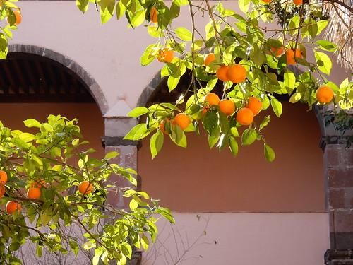 San Miguel de Allende - sinaasappels