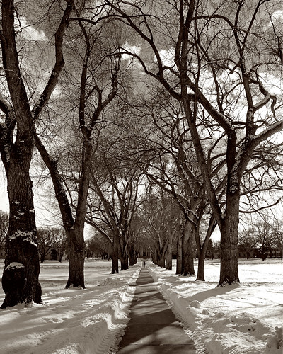 trees winter bw snow sepia landscape vanishingpoint blackwhite nikon colorado seasons d70 fort path fortcollins tunnel sidewalk narnia co collins oval csu 2007 coloradostateuniversity 50faves instantfave clff abigfave anawesomeshot instantefaved