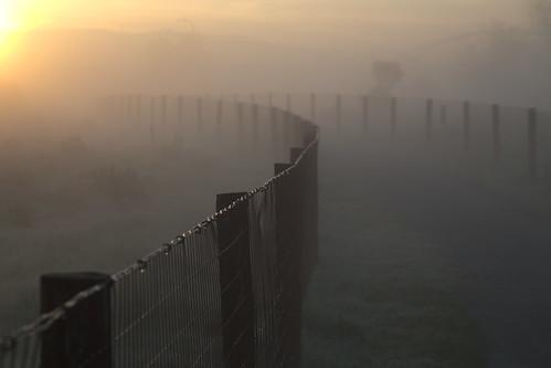 california statepark park morning grass fog sunrise fence berkeley outdoor path meadow dew mclaughlin eastshore digikam eastbayparks ebparks sylviamclaughlin rawtherapee lenswrangler