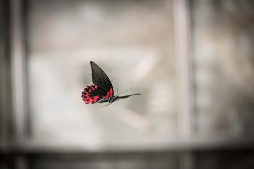 Butterfly in Flight | by Mister.render