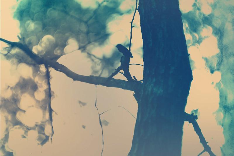 blur-dreamy-texture-texturepalace-10
