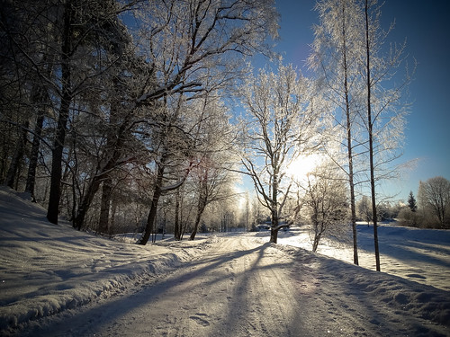 road morning blue trees winter sunset sky sun white snow nature landscape town frost shadows outdoor branches latvia backlit sunlit aluksne