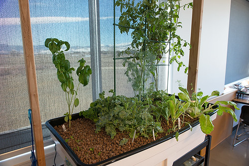 Enginursday: Aquaponics in Bloom | by SparkFunElectronics