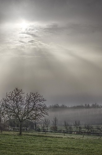 light sky sun tree green fog clouds sunrise landscape soleil pentax lumière lot arbre brouillard brume causse quercy nuzéjouls