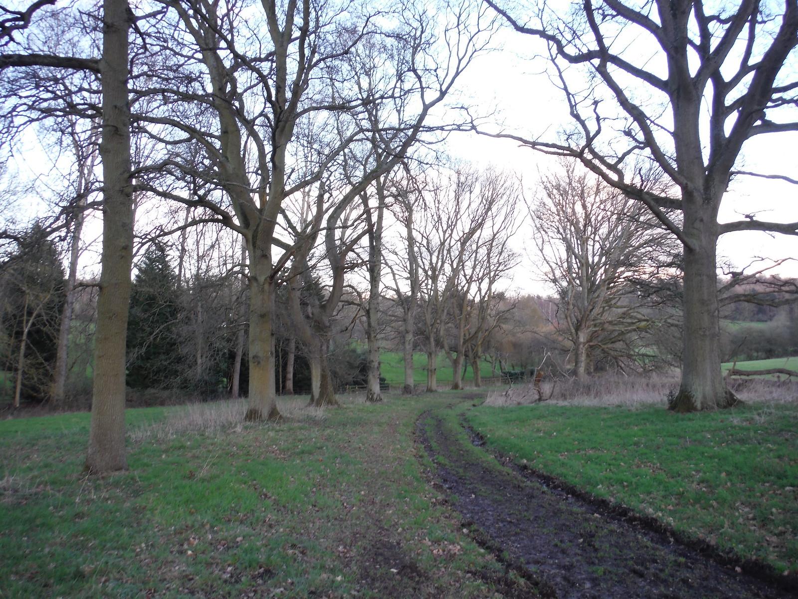Tree-lined track, Midgham Park SWC Walk 117 Aldermaston to Woolhampton (via Stanford Dingley)