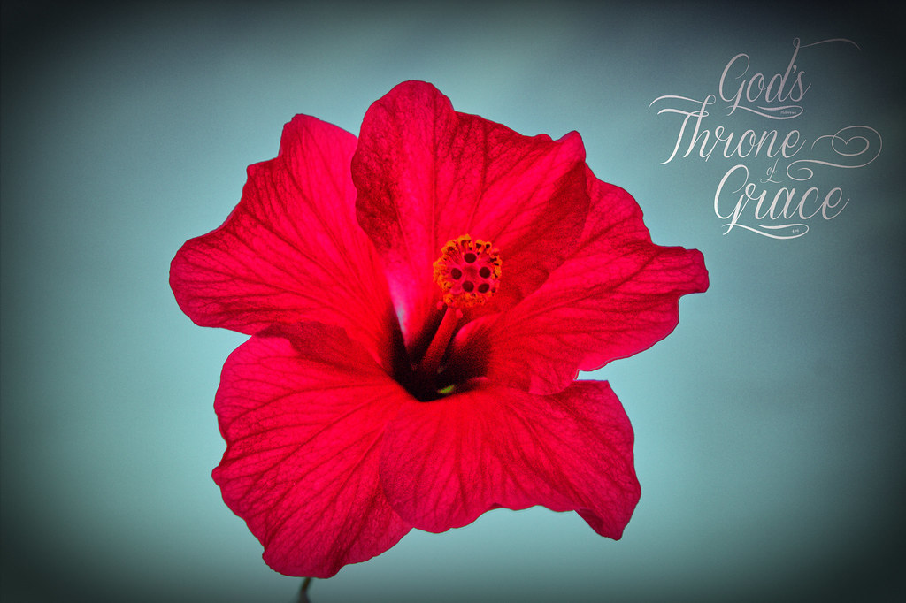 Hibiscus Grace Free Hi Res If You Havent Accepted Jesus Flickr
