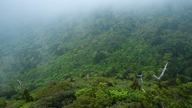 Japan Yakushima Island
