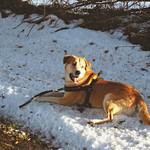 2011-01-02_13-15-18 - Hund im Schnee