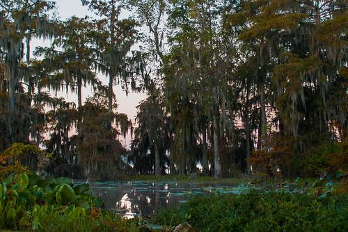 trees usa lake sunrise reeds louisiana atchafalayabasin delta bayou swamp spanishmoss wetlands cypress lakemartin