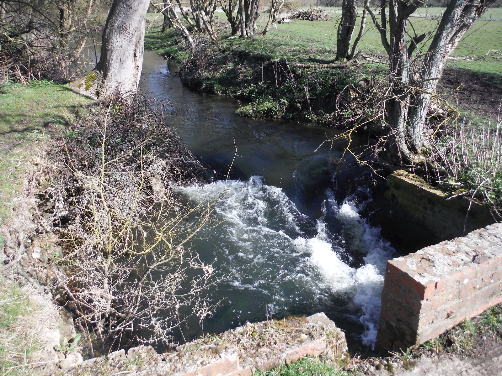 Millstream off the Thame, near Notley Abbey SWC Walk 193 Haddenham to Aylesbury (via Gibraltar and Ford)