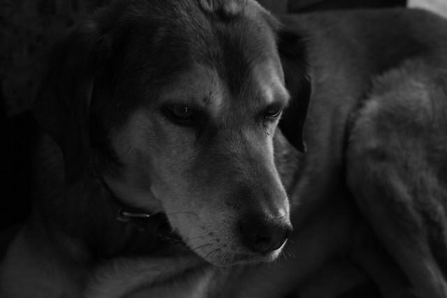 My dog Roy. B&W.