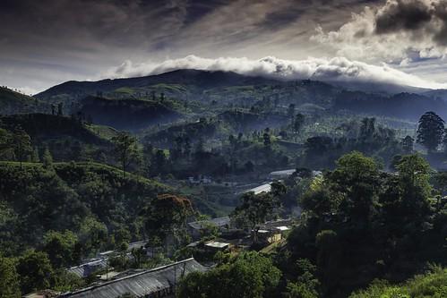 landscape srilanka teaplantation nuwaraeliya centralprovince canoneos6d