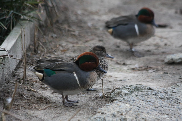 Future of Waterfowl Conservation Workshop 2016