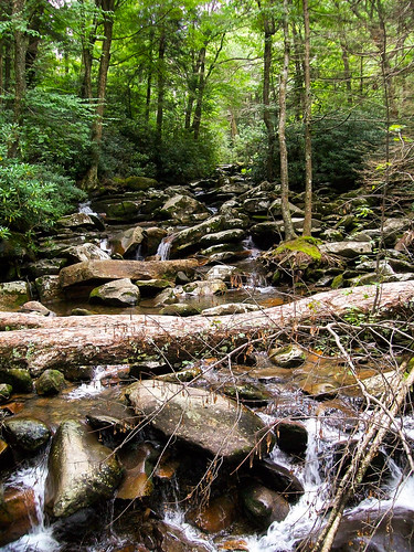 travel water creek forest woods rocks stream kodak tennessee edited exploring rocky explore waterfalls smokymountains easyshare greatsmokymountainsnationalpark tennessevacation10 saltydogphoto