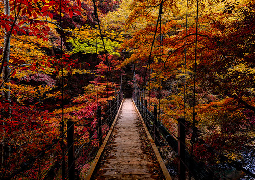 autumn leaves japan forest river landscapes october moody hiking otoño suspensionbridge 2015