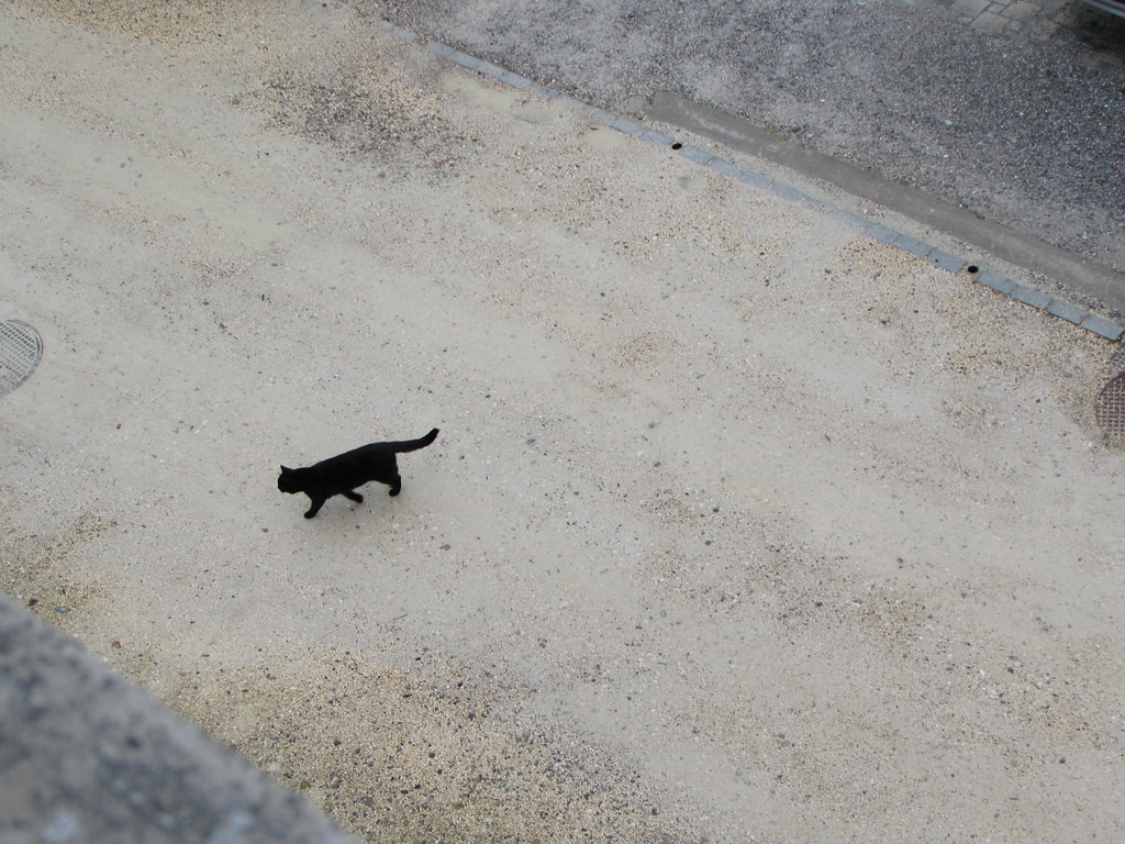 Black Cat, lucky life! #GoodFortune #FlickrFriday