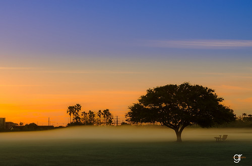 life sky plant tree nature beautiful field fog clouds sunrise landscape outdoors texas outdoor dusk serene spiritual goodmorning reflexion bohemian goldenhour treeoflife naturephotography naturelovers beautifulearth wisdomtree texasnature texasphotography txigers