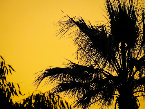 california ca sunset sky plant black silhouette yellow evening outdoor sanjose palmtree