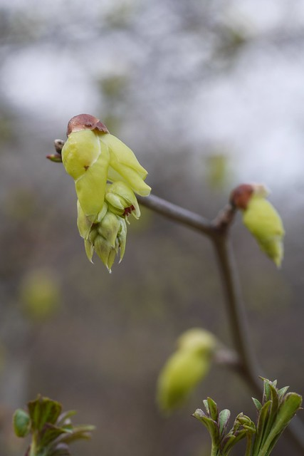 金, 2016-03-11 13:35 - Brooklyn Botanic Garden