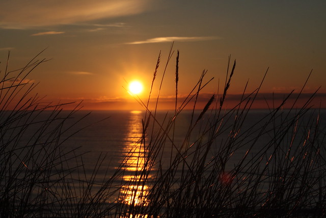 Grass, Sun & Horizon (2/2)