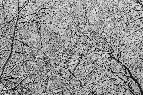 trees winter snow monochrome snowstorm