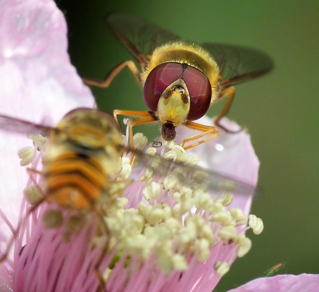 gemeinsames Honigschlecken