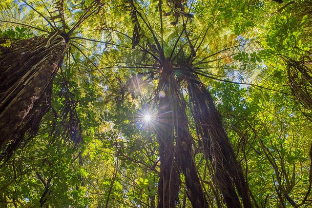 TALL TREES (EXPLORED)