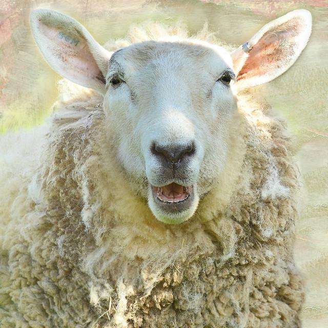 here's lookin' at ewe!