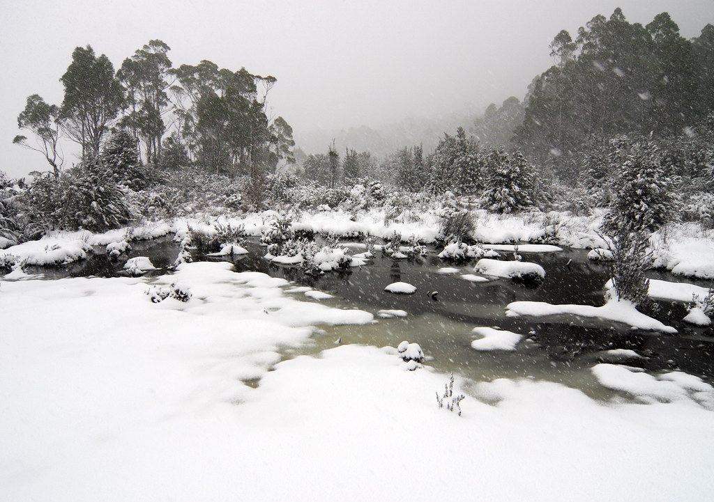 Day 5: Morning snow in Pine Valley | The Overland Track is ...