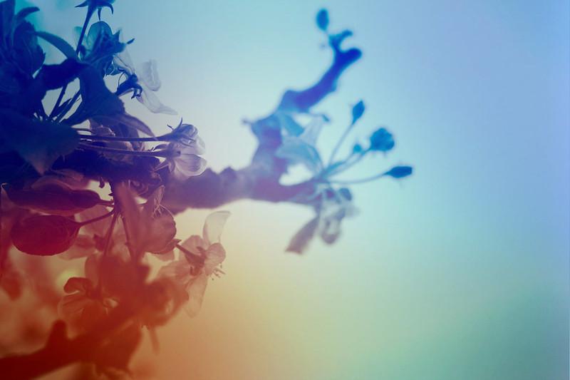blur-dreamy-texture-texturepalace-17