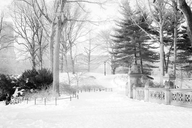 Central Park Snow 1-24-16