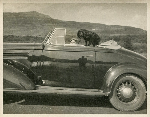 Dog sitting in a convertible | by oakenroad