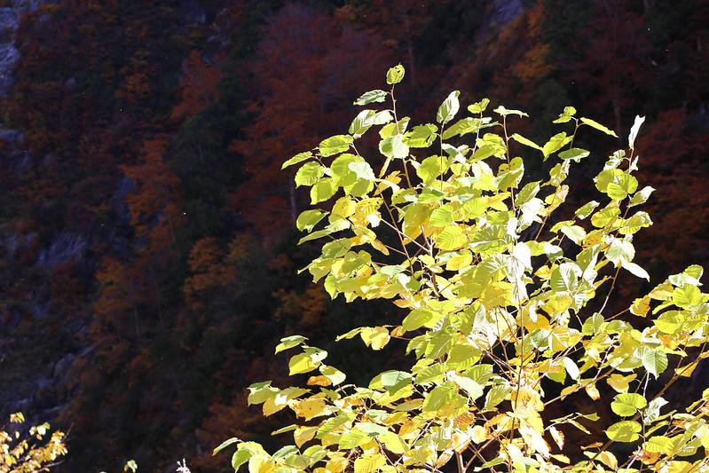 20141025-下ノ廊下-0316.jpg