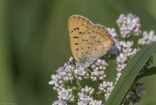 canada newbrunswick baieverte