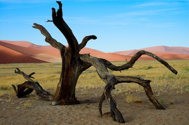 Dead tree and dune