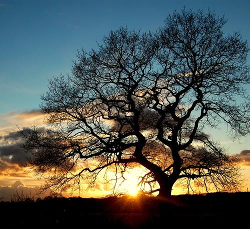 sunset sky tree night clouds landscape coolest soe abw blueribbonwinner d40 supershot 25faves mywinners shieldofexcellence platinumphoto anawesomeshot superaplus aplusphoto superbmasterpiece treesubject diamondclassphotographer flickrdiamond flickrchallengewinner d40clubtheme5
