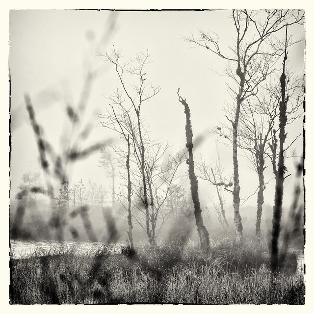 Foggy Morning Talk...