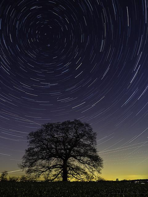 Tree Star Trails
