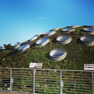 Living roof | by SarabellaE / Sara / Love in the Suburbs