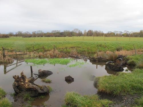 Test Meadows, just outside Romsey (II) SWC Walk 58 Mottisfont and Dunbridge to Romsey taken by Karen C.